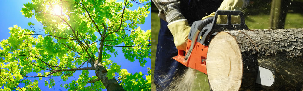 Tree Services Grand Prairie